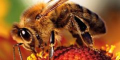 كيف يعيش النحل
