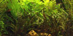 كيف تزرع النباتات